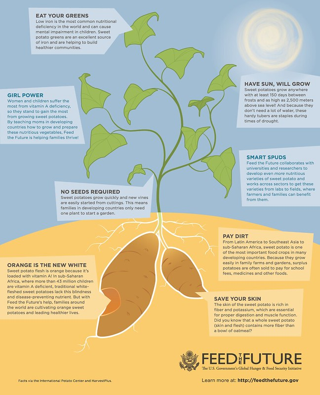 Infographic of Sweet Potato Facts