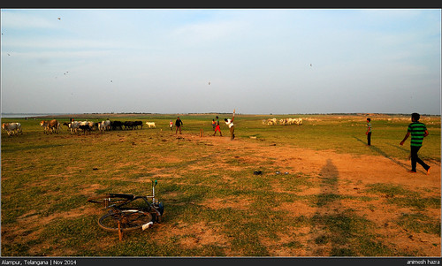 sunset india sport kids evening cow cattle cricket cycle alampur telangana