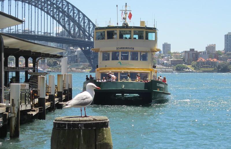 A ferry comes into Circular Quay, Sydney