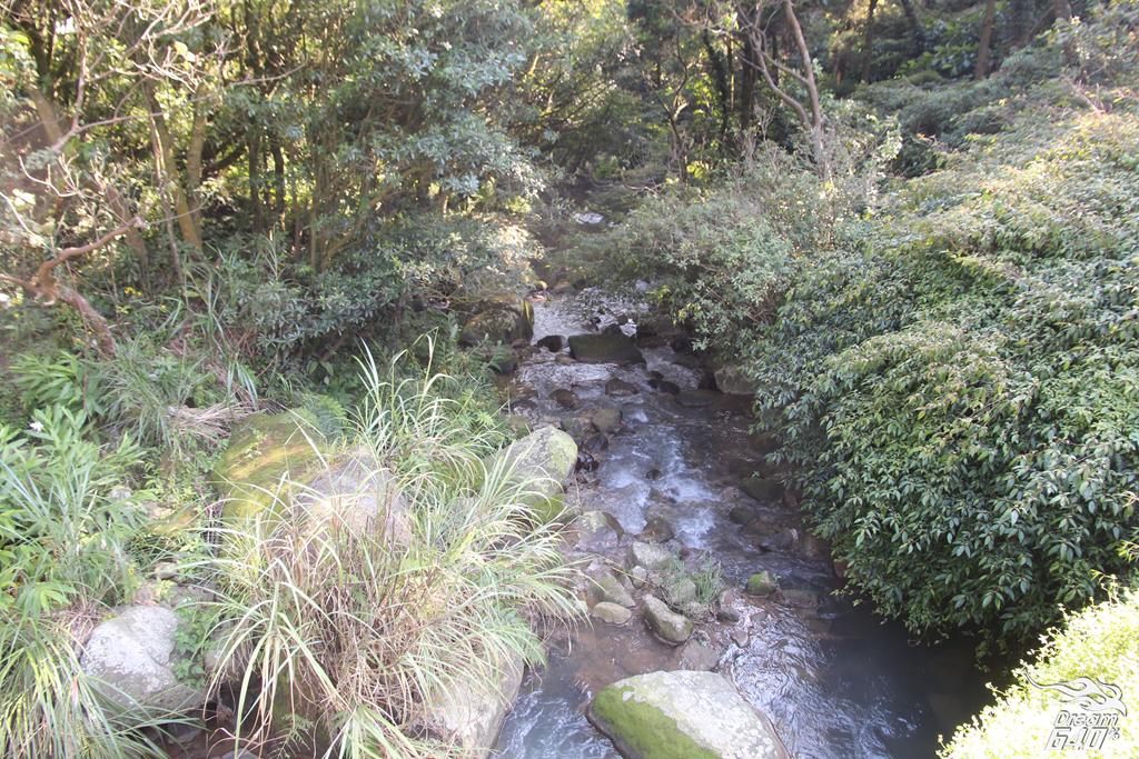 竹子湖青楓步道19