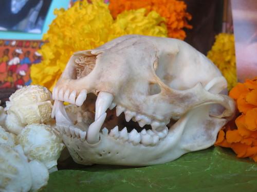 Day of the Dead: Animal Skull