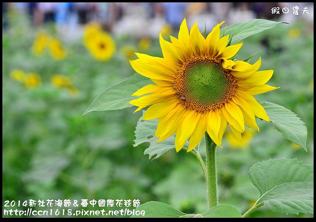 2014新社花海節&臺中國際花毯節DSC_4934