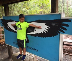 "Wes' ""wingspan"" is bigger than a Red-Tailed Hawk but much smaller than the California Condor. Field trip today to the Carolina Raptor Center."