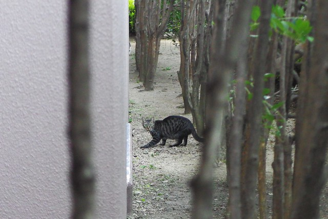 Today's Cat@2016-10-24