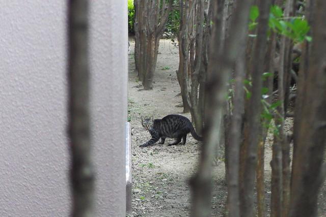 Today's Cat@2016-10-24