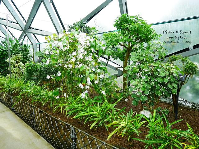 日本東京景點新宿御苑溫室植物 (5)