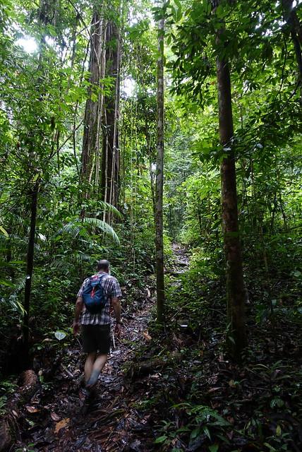 Rainforest hill