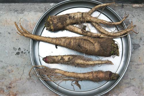 bitter turnip