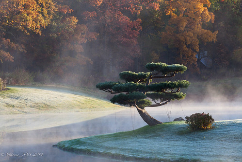 mist fog sunrise garden japanesegarden illinois preserves cookcounty chicagobotanicgarden skokielagoons foggyscenes cookcountyforestpreserves