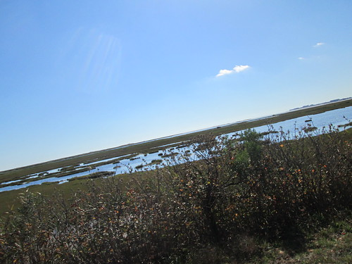 Marsh or estuary