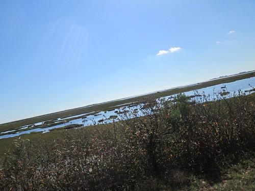 Marsh or estuary