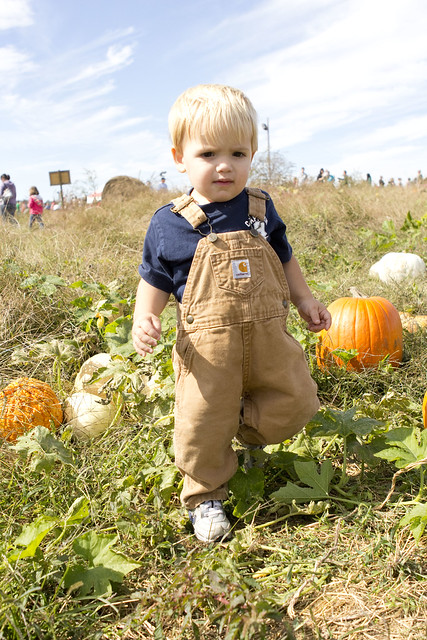 2014pumpkinpatch_adollopofmylife_61