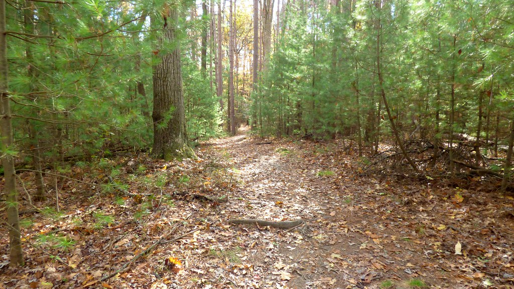 Bike path through the pines