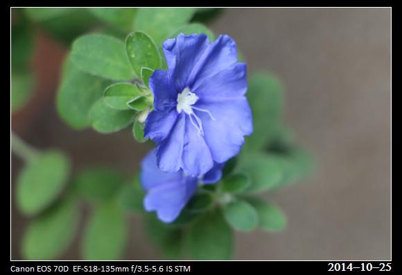20141025_Flower2