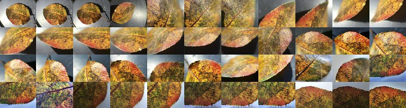 Contact sheet of colorful tiny leaf