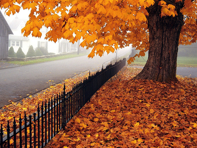 10 Things I Love About Autumn