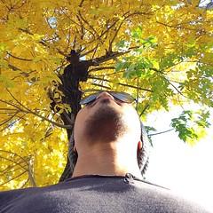 I feel like reading a book under this tree. #autumn leaves. #yerevan #armenia #travel