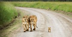 animal family002