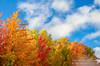 October color sunlight