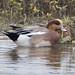 Finatic 's iNaturalist Stream has added a photo to the pool:San Diego County, California, USeBirdebird.org/ebird/view/checklist?subID=S20290862