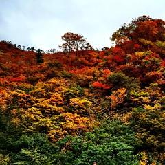 #autumn colors