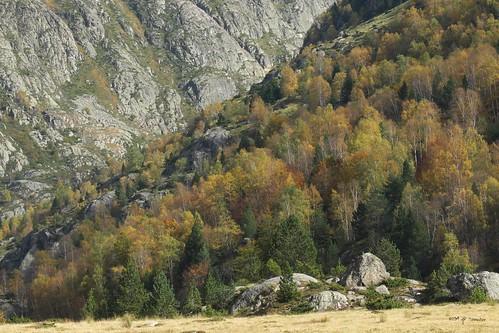 Habillée d'automne