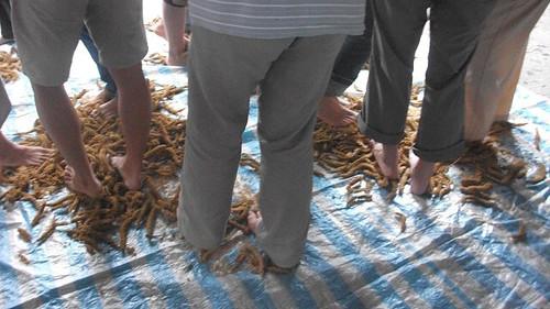 像山羊磨蹄一樣搓下小米。圖片來源:孟琬瑜