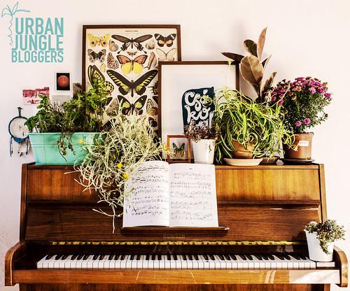 urban jungle3