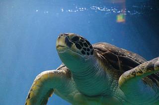 097 Schildpad in Haus des Meeres