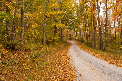 autumn fall fallcolor dirtroads countryroads countryscenes nikond60 rosehillva leecountyvirginia backroadphotography kjerrellimges