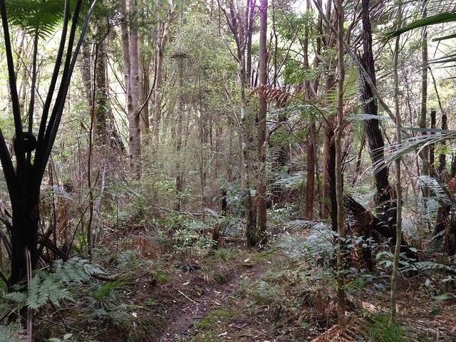 Tangihua Forest, Whakapono Track
