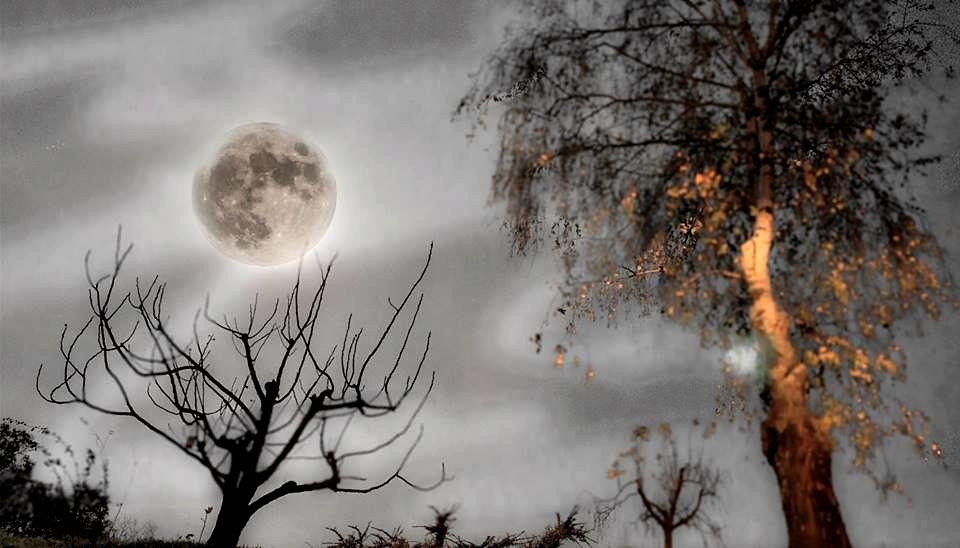 Halloween Gruppo.Halloween In Friuli Tema Halloween Gruppo Facebook Art E Arte