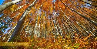 ...the beauty of autumn...
