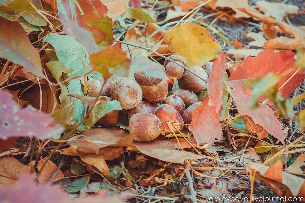 Autumn-166