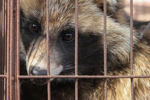 Basta Moda Crudele - Le vite dei cani-procione e volpi