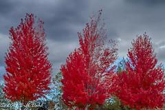 Autumn 270