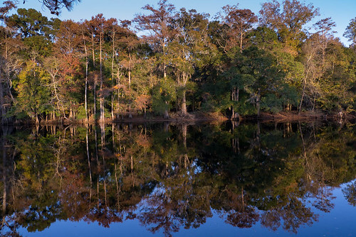 trees reflection river landscape fallcolors gh2 conwaysc waccamawriver 14140mm panasoniclumixgh2 conwayriverwalk