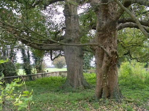 Old orchard (?) near Chaldon Church
