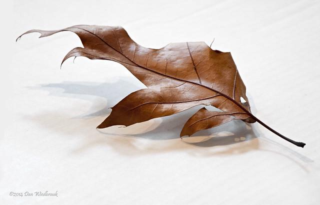 High Key Leaf 4
