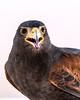Eagle 24102014-11