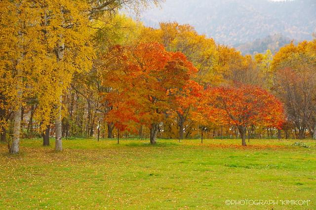 ぶどうヶ丘公園紅葉2