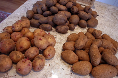potatoes IMG_0687
