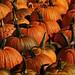 Happy Hallowe'en...Bonne journée de la Hallowee'en by Seaglass addict
