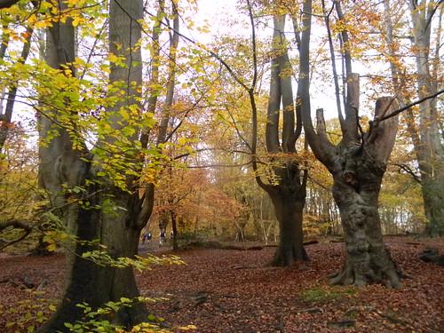 Autumn shot 2