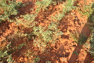 Agriculture terre algerie