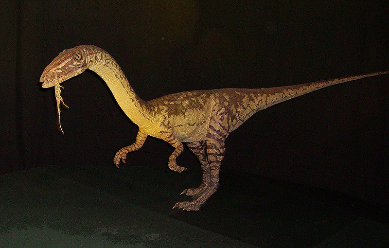 Coelophysis animatronics model in Natural History Museum, London