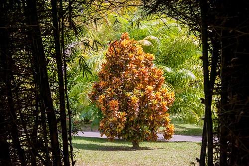 Dominica-2014-02-13-3672