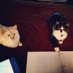 My study partners.
