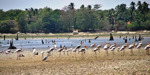 137 Marismas, aves y otras estampas en las cercanias a Kirinda (18)