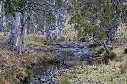 Waterfall way, New South Wales